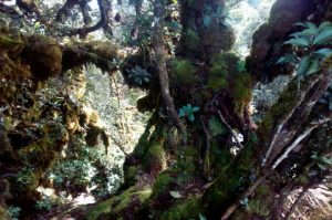 Mossy Forest 4